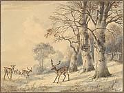 Deer under Beech Trees in Summer