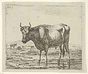 Bull Standing in Water, from Different Animals