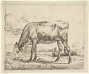Grazing Calf, from Different Animals