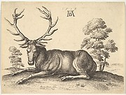 A Stag Lying, Facing Left