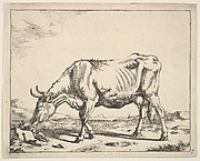 Cow, after Paulus Potter