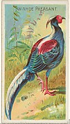 Swinhoe Pheasant, from the Birds of the Tropics series (N5) for Allen & Ginter Cigarettes Brands
