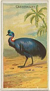 Cassowary, from the Birds of the Tropics series (N5) for Allen & Ginter Cigarettes Brands