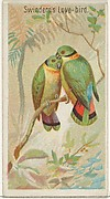 Swindern's Love-Bird, from the Birds of the Tropics series (N5) for Allen & Ginter Cigarettes Brands