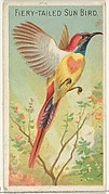 Fiery-Tailed Sun Bird, from the Birds of the Tropics series (N5) for Allen & Ginter Cigarettes Brands