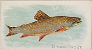 Brook Trout, from the Fish from American Waters series (N8) for Allen & Ginter Cigarettes Brands
