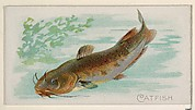 Catfish, from the Fish from American Waters series (N8) for Allen & Ginter Cigarettes Brands