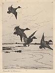 Ducks Alighting