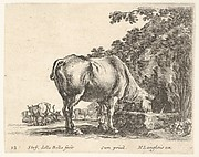 Plate 12: a cow drinking from a stone trough, other cows to left in background, from 'Diversi capricci'