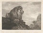 A Lion (A Lion Resting on a Rock)
