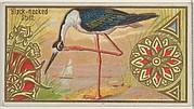 Black-necked Stilt, from the Game Birds series (N13) for Allen & Ginter Cigarettes Brands