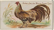 Ayam Jallak Malay Game Cock, from the Prize and Game Chickens series (N20) for Allen & Ginter Cigarettes