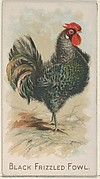 Black Frizzled Fowl, from the Prize and Game Chickens series (N20) for Allen & Ginter Cigarettes