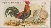 Derbyshire Red Cap, from the Prize and Game Chickens series (N20) for Allen & Ginter Cigarettes