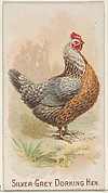 Silver-Grey Dorking Hen, from the Prize and Game Chickens series (N20) for Allen & Ginter Cigarettes