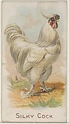 Silky Cock, from the Prize and Game Chickens series (N20) for Allen & Ginter Cigarettes