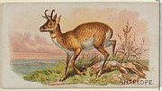 Antelope, from the Quadrupeds series (N21) for Allen & Ginter Cigarettes