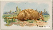 Armadillo, from the Quadrupeds series (N21) for Allen & Ginter Cigarettes
