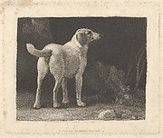 Dog (A Foxhound Viewed from Behind)