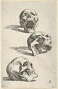 Three Human Skulls - Study for