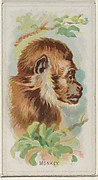 Monkey, from the Wild Animals of the World series (N25) for Allen & Ginter Cigarettes