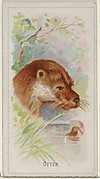 Otter, from the Wild Animals of the World series (N25) for Allen & Ginter Cigarettes