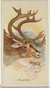 Reindeer, from the Wild Animals of the World series (N25) for Allen & Ginter Cigarettes