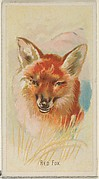 Red Fox, from the Wild Animals of the World series (N25) for Allen & Ginter Cigarettes