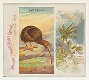 Apteryx, from Birds of the Tropics series (N38) for Allen & Ginter Cigarettes