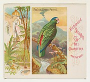 Festive Green Parrot, from Birds of the Tropics series (N38) for Allen & Ginter Cigarettes