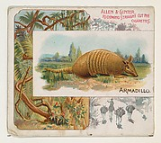 Armadillo, from Quadrupeds series (N41) for Allen & Ginter Cigarettes