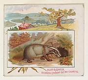 Badger, from Quadrupeds series (N41) for Allen & Ginter Cigarettes