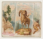 Bighorn, from Quadrupeds series (N41) for Allen & Ginter Cigarettes