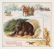 Black Bear, from Quadrupeds series (N41) for Allen & Ginter Cigarettes