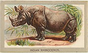 Indian Rhinoceros, from the Animals of the World series (T180), issued by Abdul Cigarettes