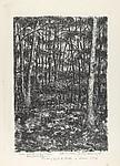 Woods at Deerfield (Our Retreat in the Woods, Deerfield, Illinois)