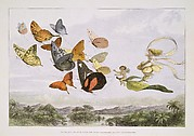 The Fairy Queen Takes an Airy Drive in a Light Carriage, a Twelve-in-hand, drawn by Thoroughbred Butterflies