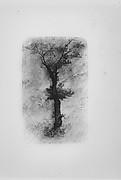 Étude d'un Arbre (Study of a Tree)