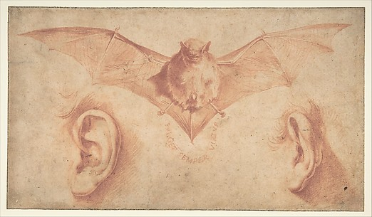 Studies of Two Ears and of a Bat. Below, the motto: FULGET SEMPER VIRTUS