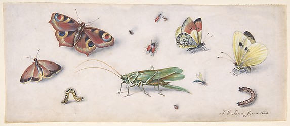 Insects, Butterflies, and a Grasshopper