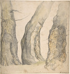 Study of Three Old Gnarled Trees
