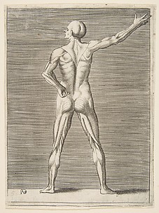 Man seen from the Back, with right Arm extended and left Hand on his Hip