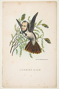 Humming Bird (Thomas B. Florence), from The Comic Natural History of the Human Race