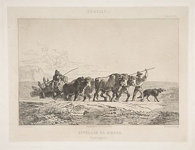 Harnessing of Cattle (Haut-Dauphiné)