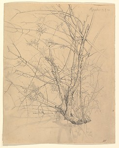 Study of a Tree Standing in Water in the Düsseldorf Hofgarten; verso: Studies of Plants