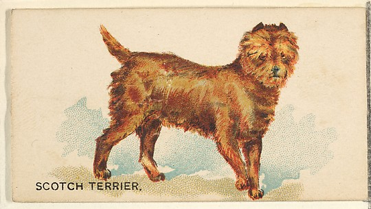 Scotch Terrier, from the Dogs of the World series for Old Judge Cigarettes