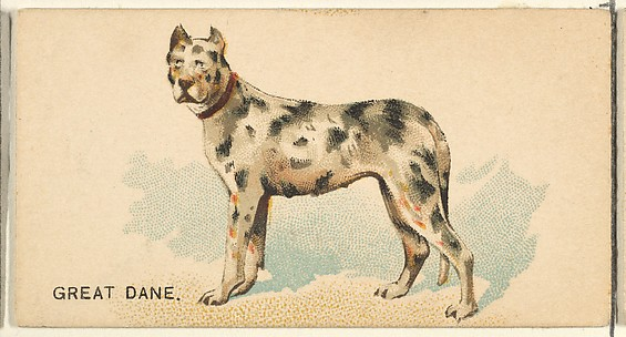 Great Dane, from the Dogs of the World series for Old Judge Cigarettes