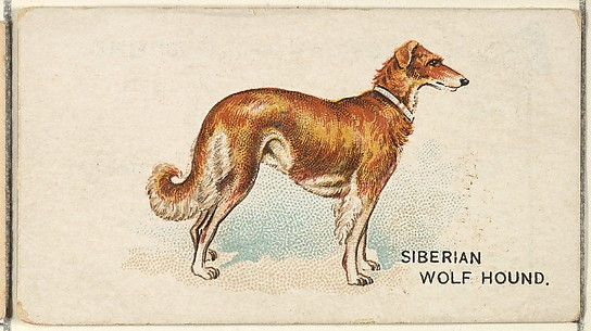 Siberian Wolf Hound, from the Dogs of the World series for Old Judge Cigarettes