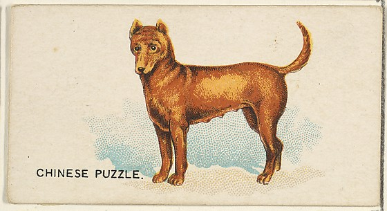 Chinese Puzzle, from the Dogs of the World series for Old Judge Cigarettes