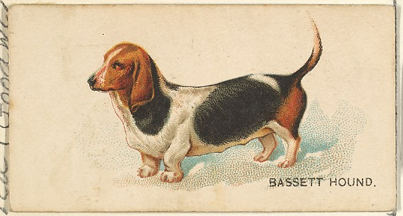 Bassett Hound, from the Dogs of the World series for Old Judge Cigarettes